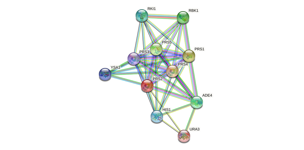 PRS2 protein (Saccharomyces cerevisiae) - STRING interaction network