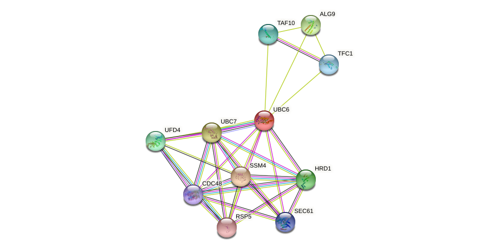 UBC6 protein (Saccharomyces cerevisiae) - STRING interaction network