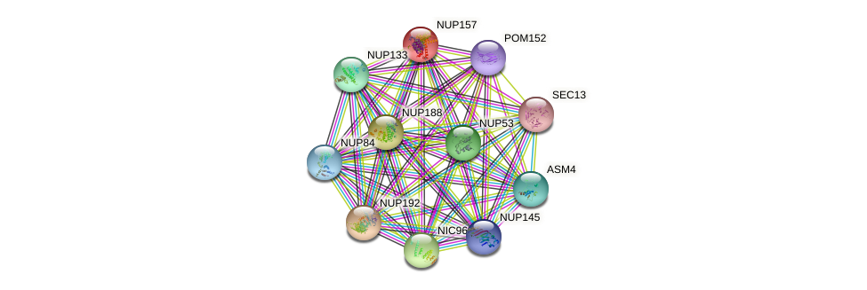 NUP157 protein (Saccharomyces cerevisiae) - STRING interaction network