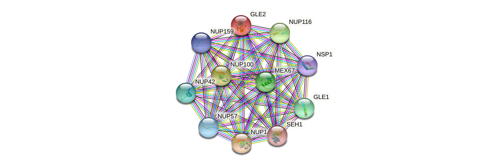 GLE2 protein (Saccharomyces cerevisiae) - STRING interaction network