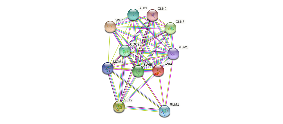 SWI4 protein (Saccharomyces cerevisiae) - STRING interaction network