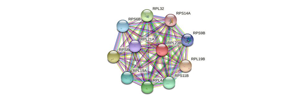 RPL23B protein (Saccharomyces cerevisiae) - STRING interaction network