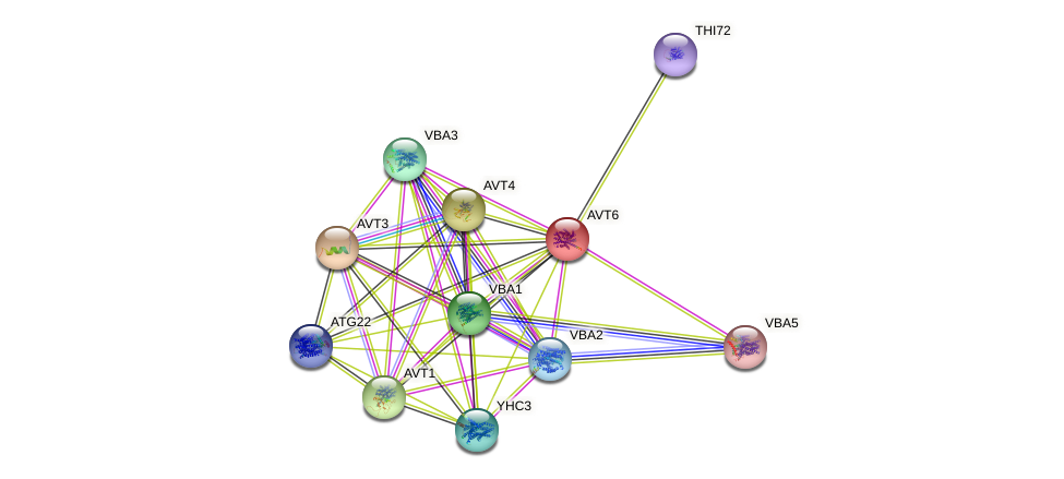AVT6 protein (Saccharomyces cerevisiae) - STRING interaction network