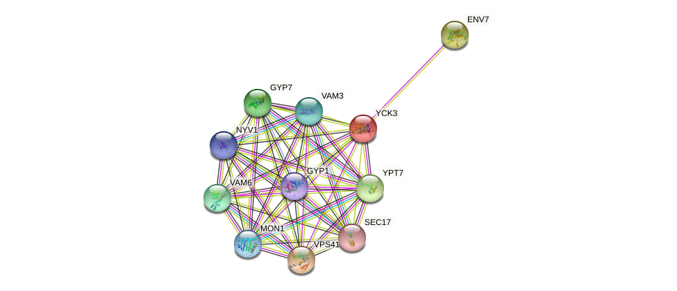 YCK3 protein (Saccharomyces cerevisiae) - STRING interaction network