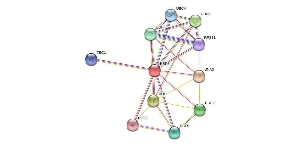 RSP5 protein (Saccharomyces cerevisiae) - STRING interaction network