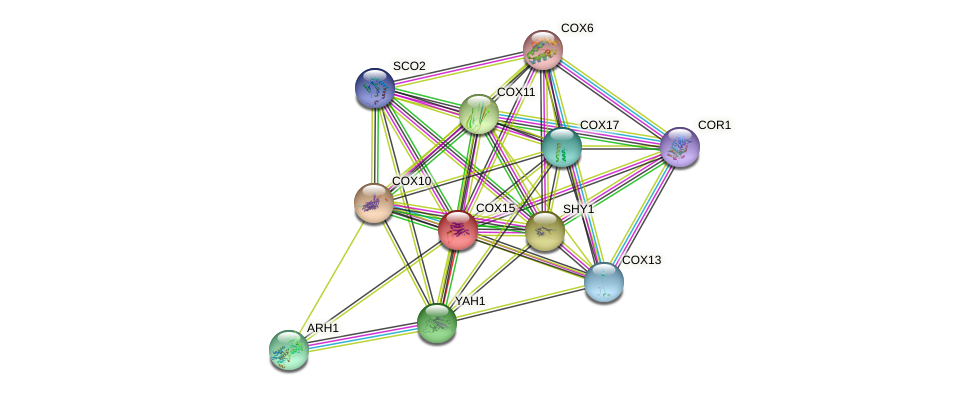 COX15 protein (Saccharomyces cerevisiae) - STRING interaction network