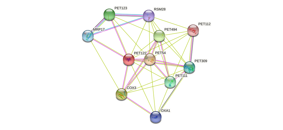 PET122 protein (Saccharomyces cerevisiae) - STRING interaction network