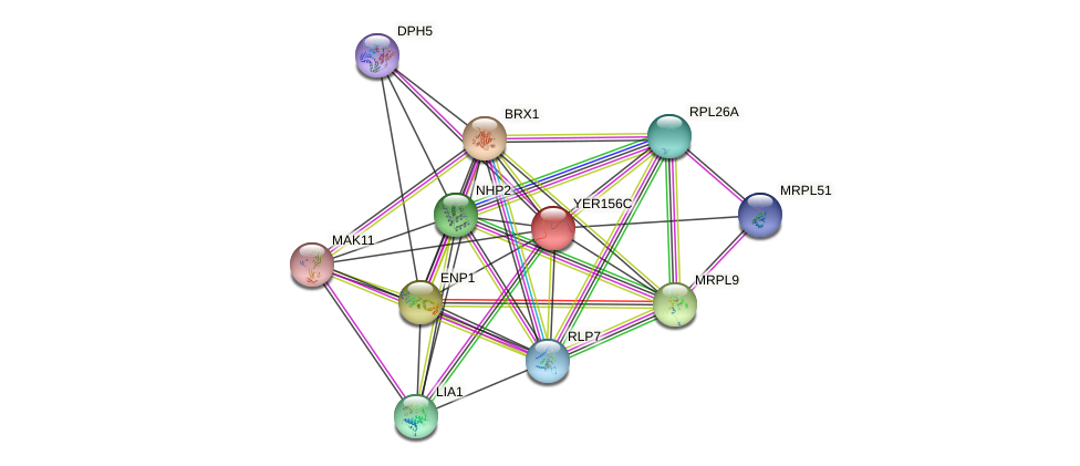YER156C protein (Saccharomyces cerevisiae) - STRING interaction network