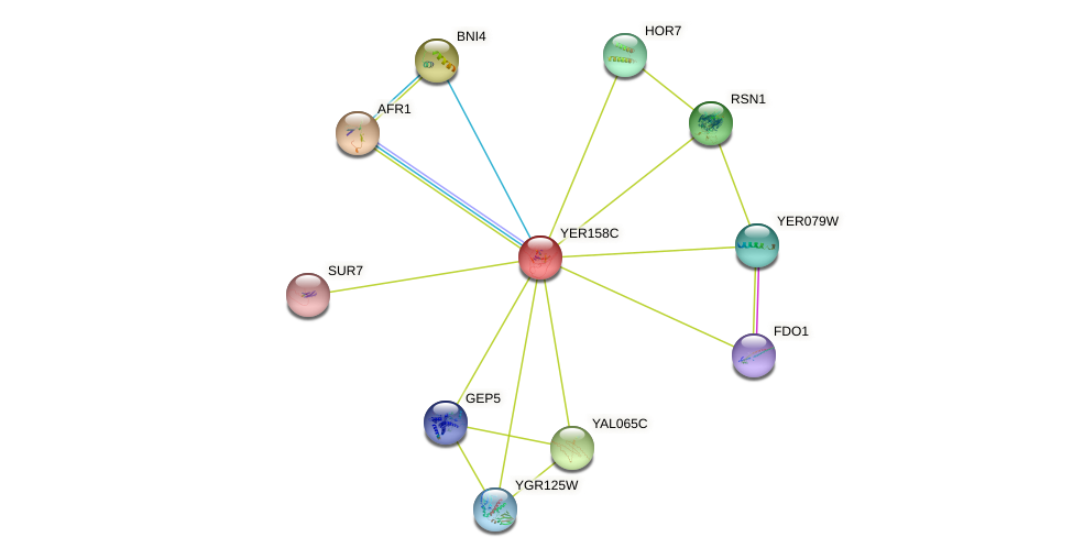 YER158C protein (Saccharomyces cerevisiae) - STRING interaction network