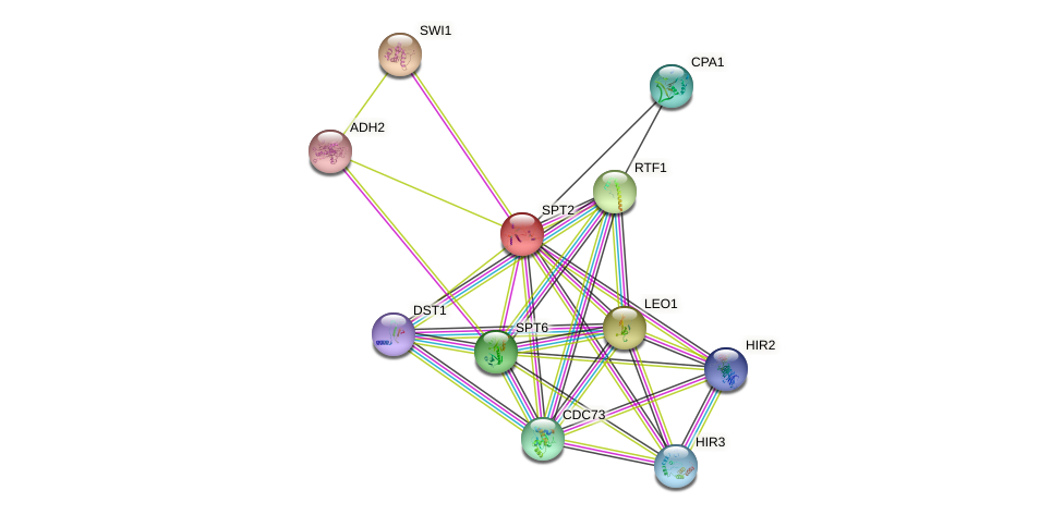 SPT2 protein (Saccharomyces cerevisiae) - STRING interaction network