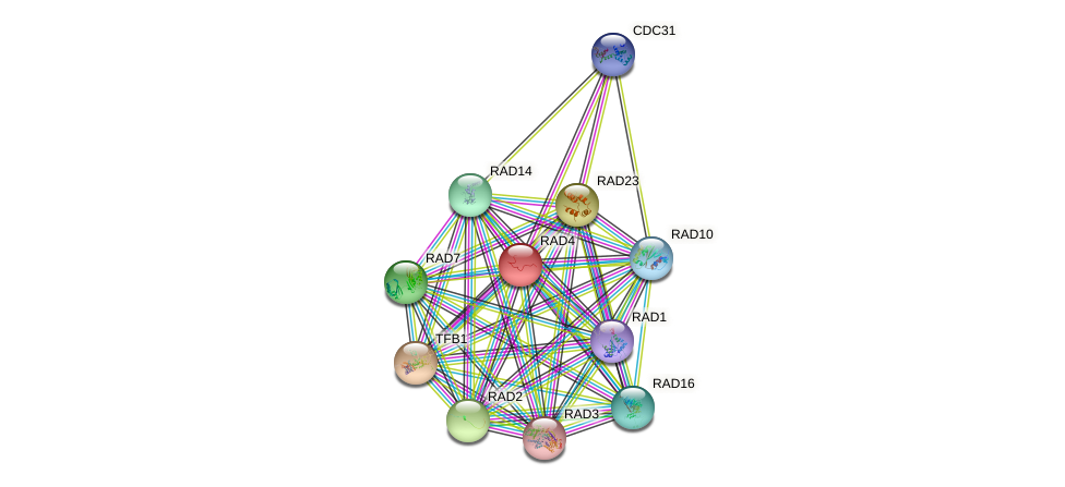 RAD4 protein (Saccharomyces cerevisiae) - STRING interaction network
