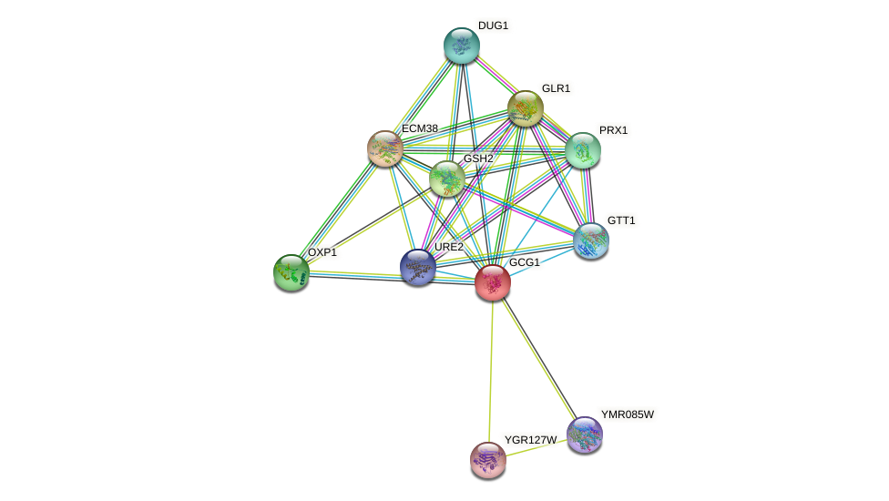 GCG1 protein (Saccharomyces cerevisiae) - STRING interaction network