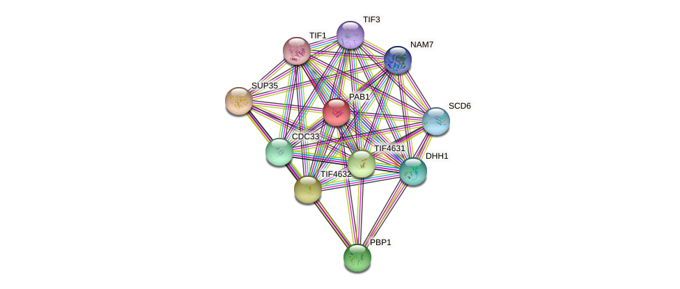 PAB1 protein (Saccharomyces cerevisiae) - STRING interaction network