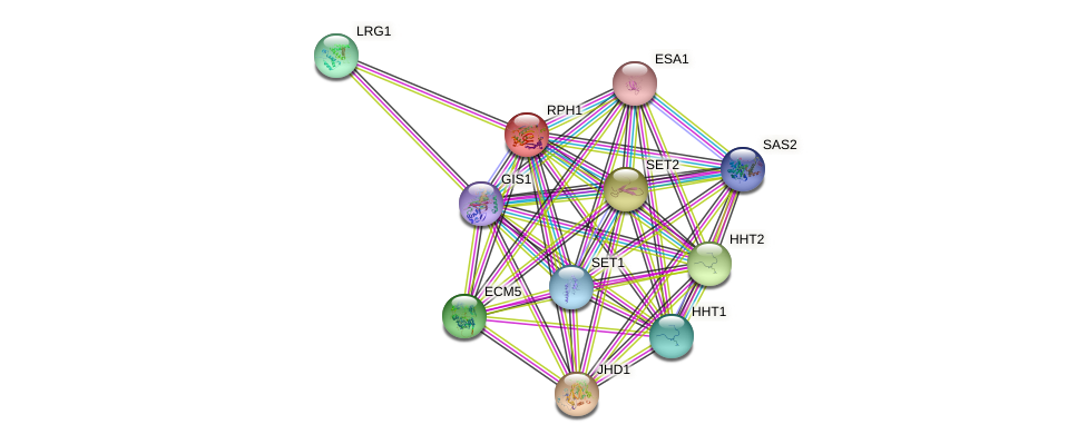 RPH1 protein (Saccharomyces cerevisiae) - STRING interaction network
