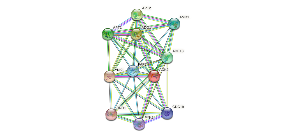 ADK2 protein (Saccharomyces cerevisiae) - STRING interaction network