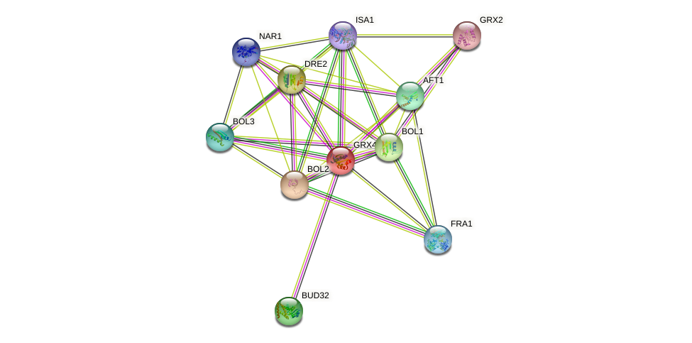 GRX4 protein (Saccharomyces cerevisiae) - STRING interaction network