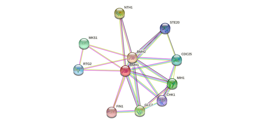BMH1 protein (Saccharomyces cerevisiae) - STRING interaction network