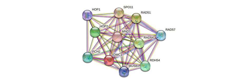 DMC1 protein (Saccharomyces cerevisiae) - STRING interaction network