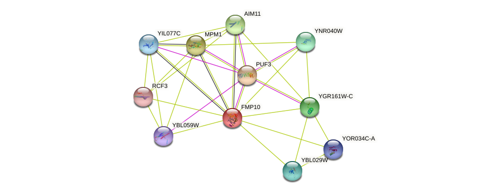 FMP10 protein (Saccharomyces cerevisiae) - STRING interaction network