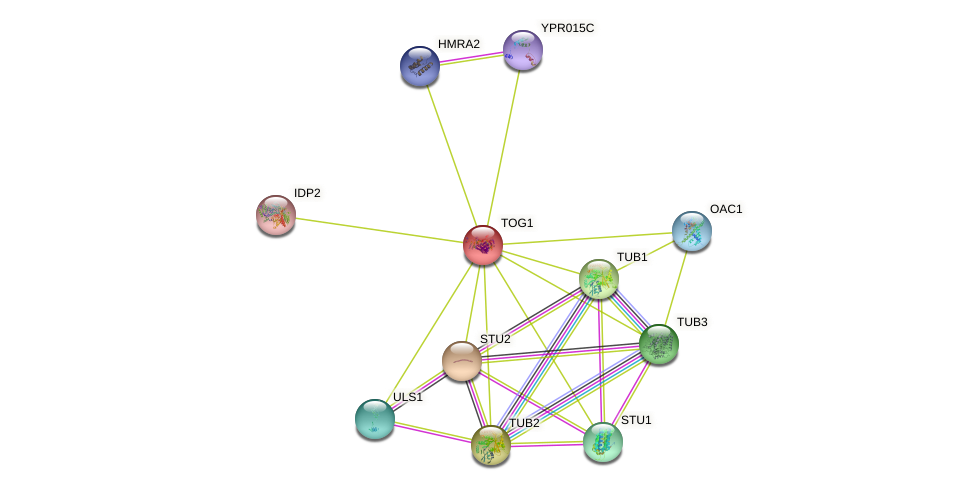 TOG1 protein (Saccharomyces cerevisiae) - STRING interaction network