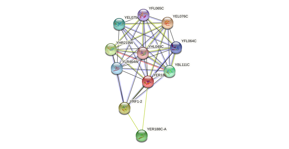 YER189W protein (Saccharomyces cerevisiae) - STRING interaction network