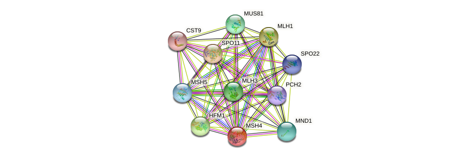 MSH4 protein (Saccharomyces cerevisiae) - STRING interaction network