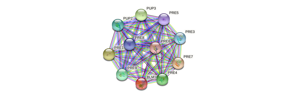 BLM10 protein (Saccharomyces cerevisiae) - STRING interaction network