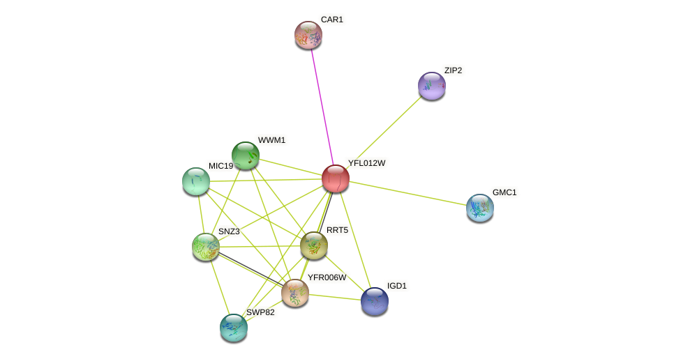 YFL012W protein (Saccharomyces cerevisiae) - STRING interaction network