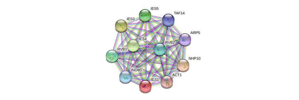 IES1 protein (Saccharomyces cerevisiae) - STRING interaction network