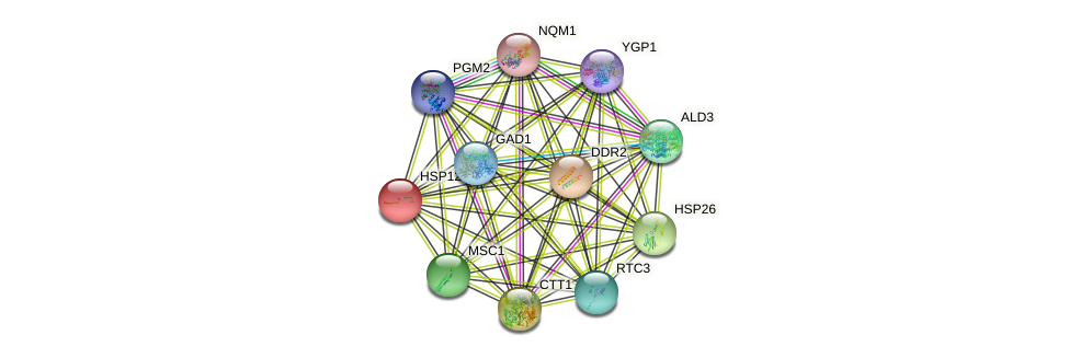 HSP12 protein (Saccharomyces cerevisiae) - STRING interaction network