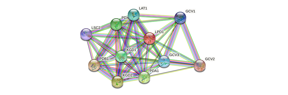 LPD1 protein (Saccharomyces cerevisiae) - STRING interaction network