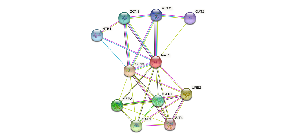 GAT1 protein (Saccharomyces cerevisiae) - STRING interaction network
