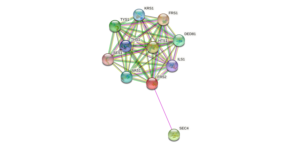 FRS2 protein (Saccharomyces cerevisiae) - STRING interaction network