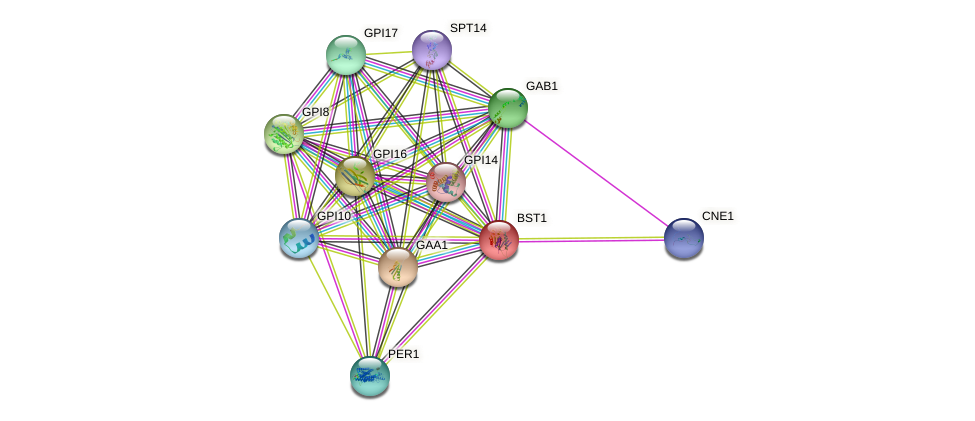 BST1 protein (Saccharomyces cerevisiae) - STRING interaction network