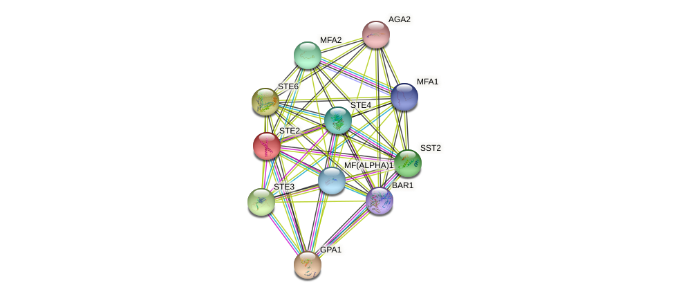 STE2 protein (Saccharomyces cerevisiae) - STRING interaction network