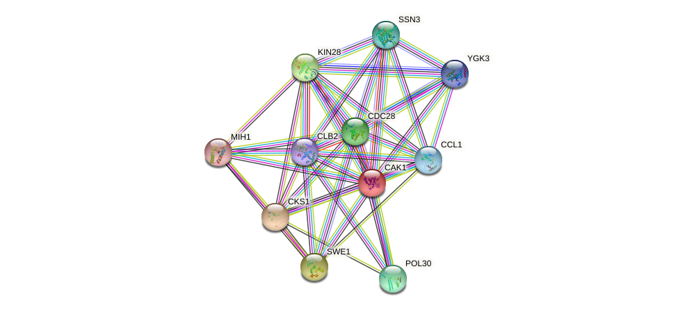 CAK1 protein (Saccharomyces cerevisiae) - STRING interaction network