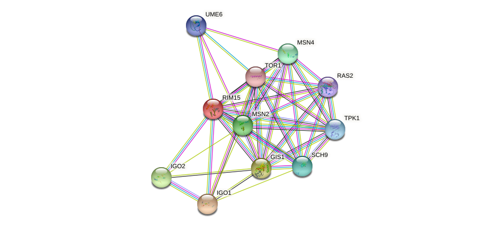RIM15 protein (Saccharomyces cerevisiae) - STRING interaction network