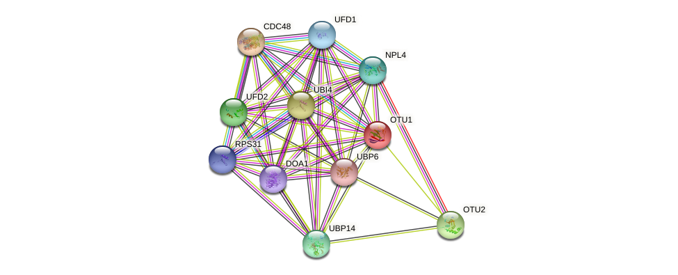 OTU1 protein (Saccharomyces cerevisiae) - STRING interaction network