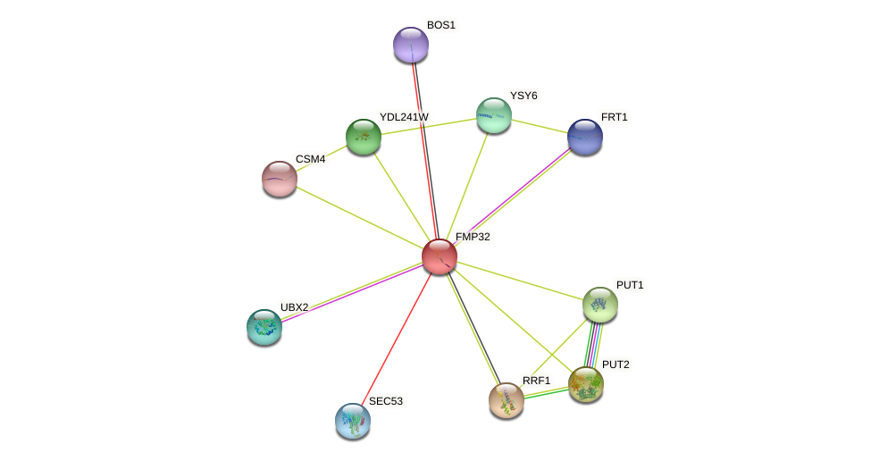FMP32 protein (Saccharomyces cerevisiae) - STRING interaction network