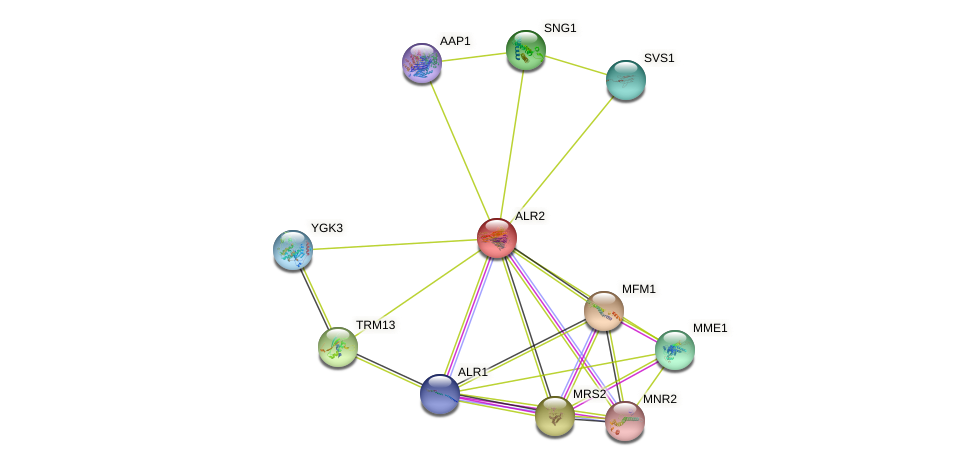 ALR2 protein (Saccharomyces cerevisiae) - STRING interaction network