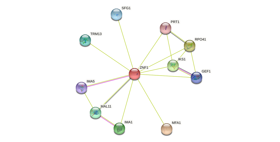 ZNF1 protein (Saccharomyces cerevisiae) - STRING interaction network