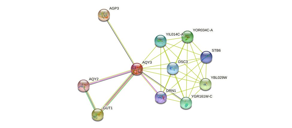 AQY3 protein (Saccharomyces cerevisiae) - STRING interaction network