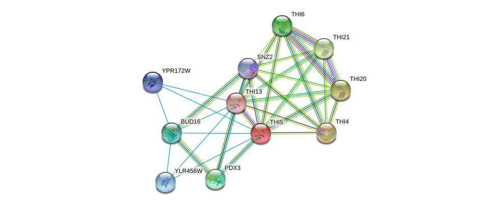 THI5 protein (Saccharomyces cerevisiae) - STRING interaction network