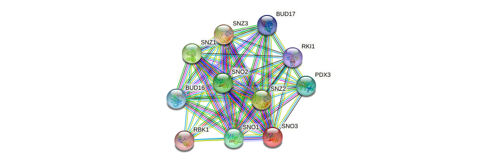 SNO3 protein (Saccharomyces cerevisiae) - STRING interaction network