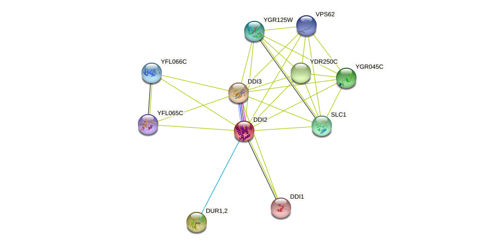DDI2 protein (Saccharomyces cerevisiae) - STRING interaction network