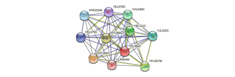 YFL064C protein (Saccharomyces cerevisiae) - STRING interaction network