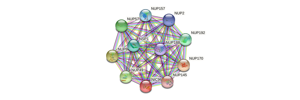 NIC96 protein (Saccharomyces cerevisiae) - STRING interaction network