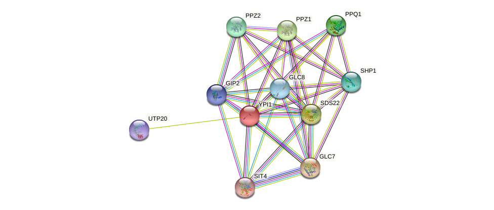 YPI1 protein (Saccharomyces cerevisiae) - STRING interaction network