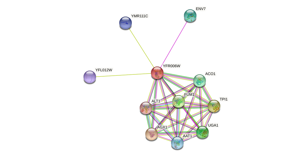 YFR006W protein (Saccharomyces cerevisiae) - STRING interaction network