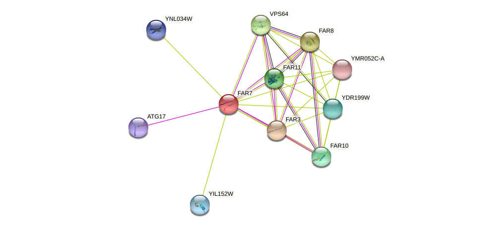 FAR7 protein (Saccharomyces cerevisiae) - STRING interaction network